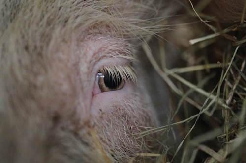 Elses Auge, © Stiftung Hof Butenland/Karin Mück