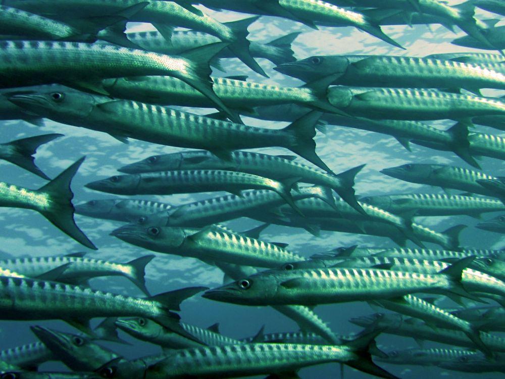 aquakulturenretter der meere  vegane gesellschaft