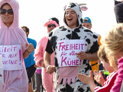 Kühe und Schweine begleiteten den Lauf