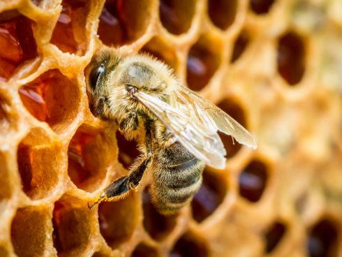 Biene in Wabe