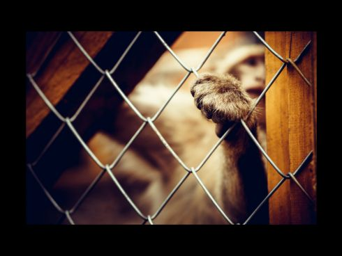 Affe im Käfig mit durchgestreckter Pfote