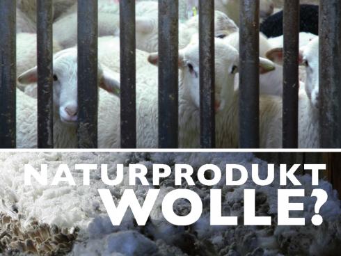 Faltblatt zum Thema Wolle, Din A5
